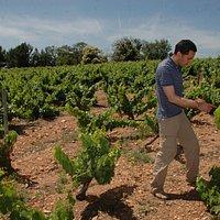 Paseo por.uno de los viñedos de mayor valor de Europa