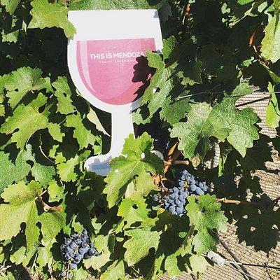 Between Vineyards