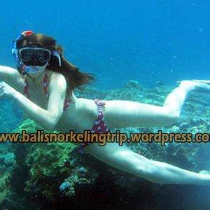 Bali Snorkeling Trip