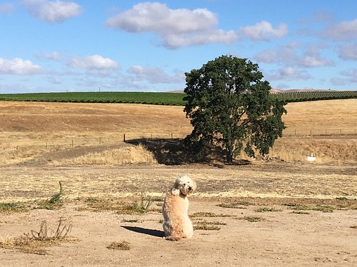 Enjoy the views - and the dogs!