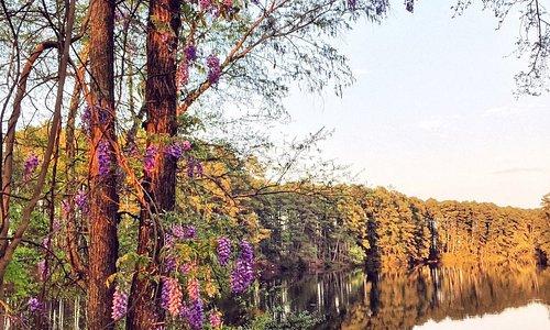 Elder Lake at Synergy Park in spring.