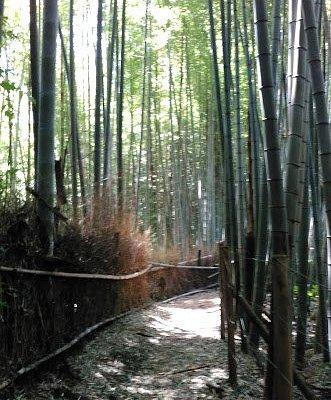 森内の竹林