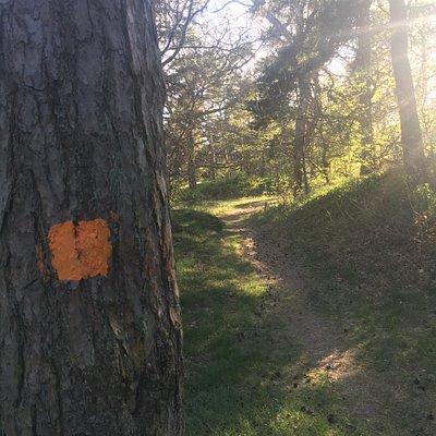 Skåneleden SL 4 / Österlenleden
