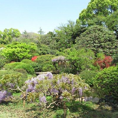 樹木や花など