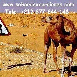 saharaexcursiones.com