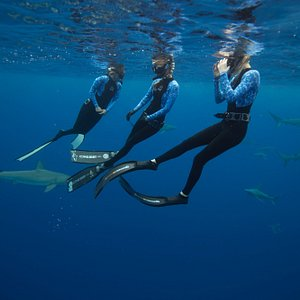 Our marine biologist will tell you all about the sharks and how to swim with them in the safest