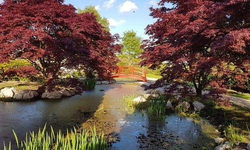 View of Water Garden