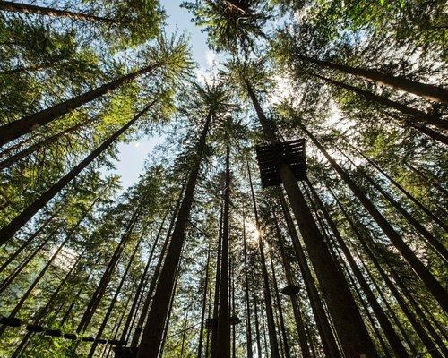 Seilpark Engelberg - Einblick Wald