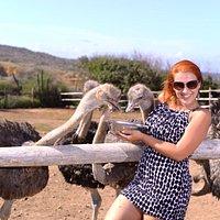 Fun at the ostrich farm
