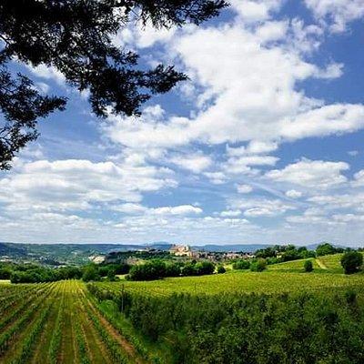 La vista sulla Città di Orvieto e su alcuni dei nostri vitigni