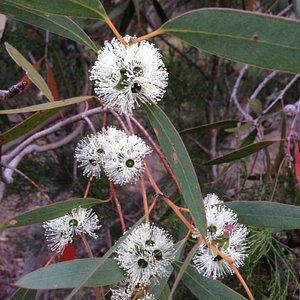 Edithburgh Flora Reserve