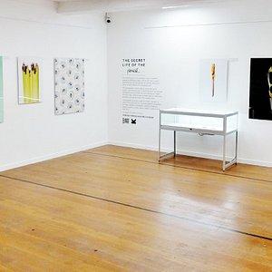 Secret Life of the Pencil Exhibition 2017