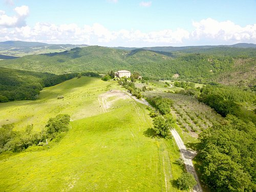 The olive grove and the big pasture of the horses