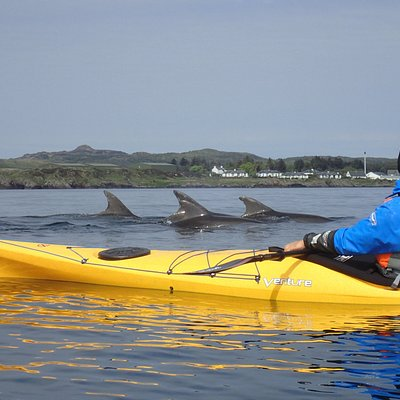 We can't promise dolphins on every trip!