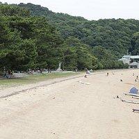 横の桂が浜