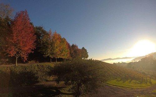 Outono: explosão de cores!