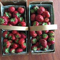 Sweetest berries