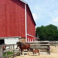 A Clydesdale and a pony at Randall Oaks Zoo