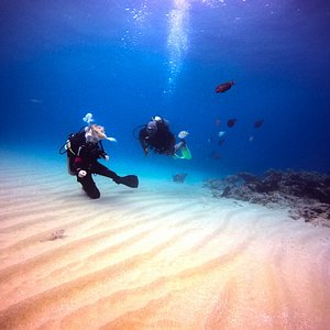 Everyday discovering new marine life
