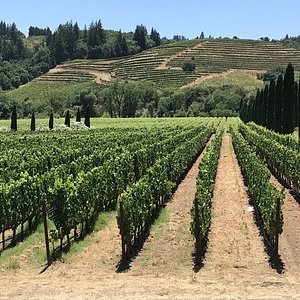 Lovely vineyard photos from taken during one of our recent tours
