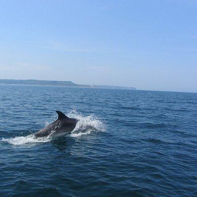 Ce jour là les dauphins étaient avec nous.