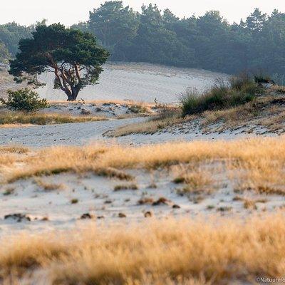 Nationaal Park Loonse en Drunense Duinen