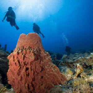 Diving with Blue Island Divers Roatan