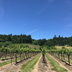We were encouraged by staff to take a stroll through the vineyard, it was beautiful weather that
