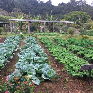 Visit an organic farm in Costa Rica for a cooking class and meal with locals - Traveling Spoon