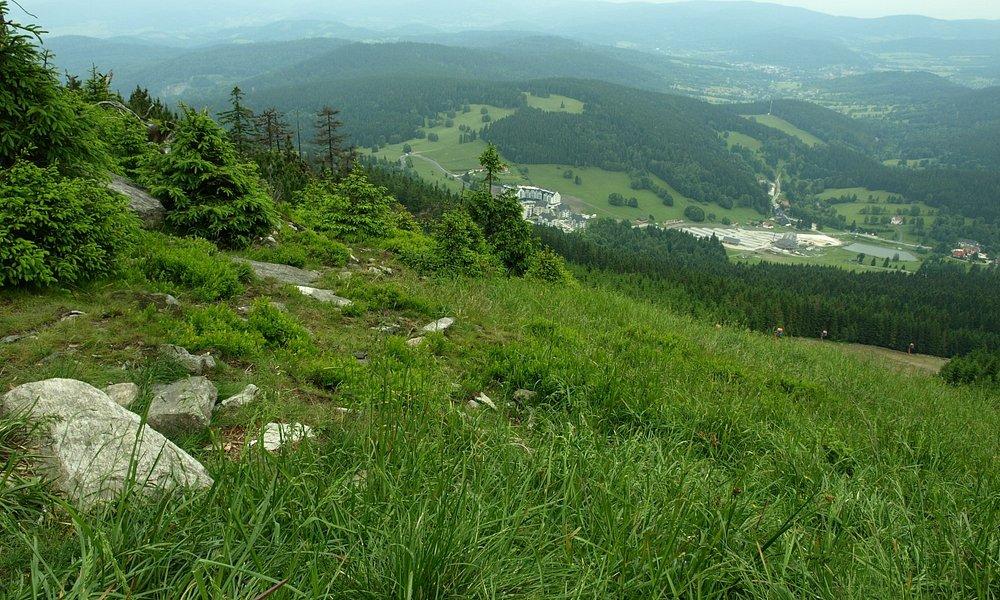 Czarna Góra widok ze szczytu