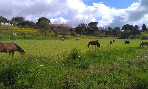 Horse Riding-Reiten-Balade a cheval-Paardrijden-passeios a cavalo-paseos a caballo-Portugal by H