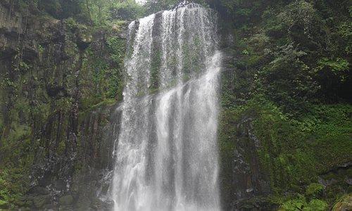 桜滝の風景