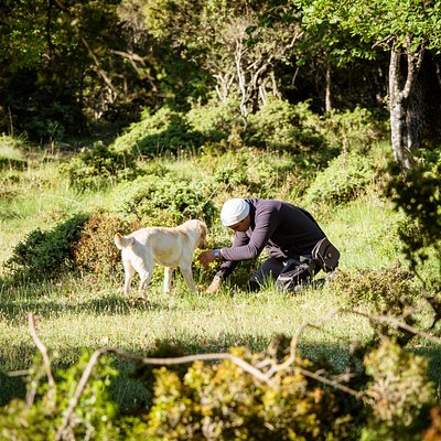 Finding truffles - Truffle Hunting at Meteora
