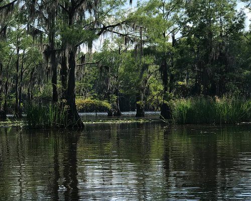 One of the many views of the Bald Cypress tress along Caddo Lake