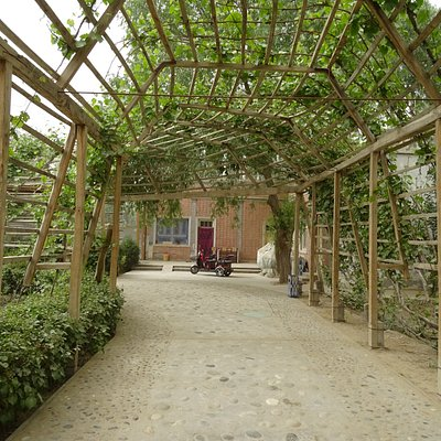 lanes covered with grape plants for shade