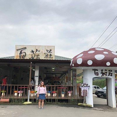 The mushroom farm