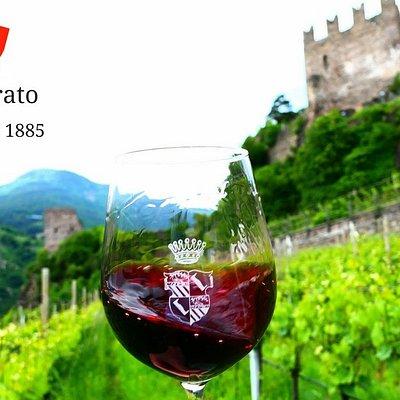 calice di Pinot nero Castelsegonzano e sullo sfondo il vigneto e il Castello della famiglia a Pr