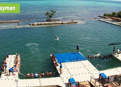 Dolphin Cove Cayman