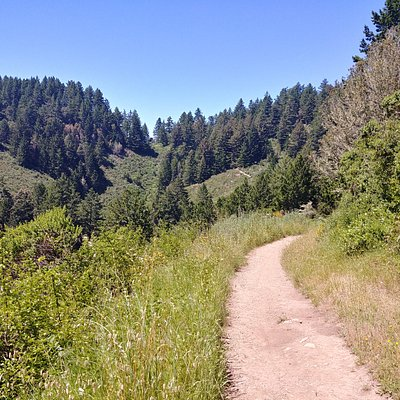The Harkins Ridge Trail