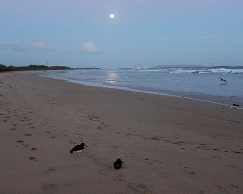 Spiaggia e luna