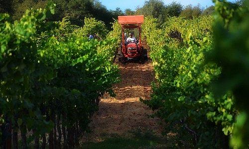 Twisted Oak Winery | Maria Camillo