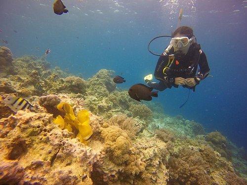 diving at mnemba atoll