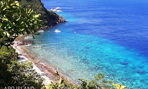 Apo Island in Negros Oriental