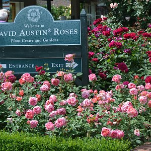 Entrance to David Austin Roses.