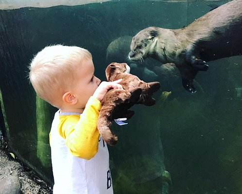 Make otter this world connections with wildlife!