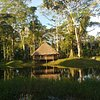 What to do and see in Madre de Dios Region, Madre de Dios Region: The Best Multi-day Tours