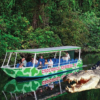 Crocodile Express cruises will take you up close to see our unique wildlife and the rainforest