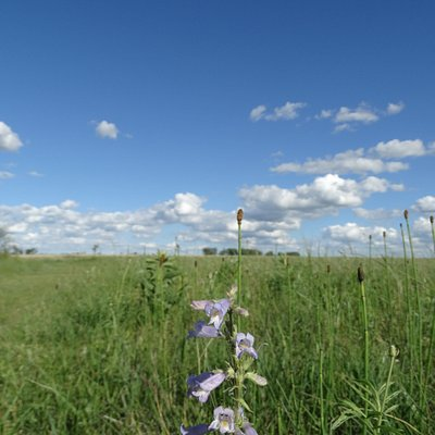 Wild Flowers on Blue Stem Prairie Scientific and Natural Area