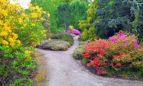 Take your choice of two ways down the secret garden. Gorgeous plants and trees of many varieties