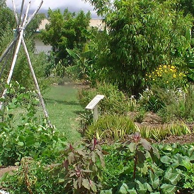 A small portion of the one acre community garden
